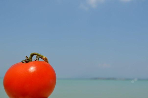 Sunbathing Tomato