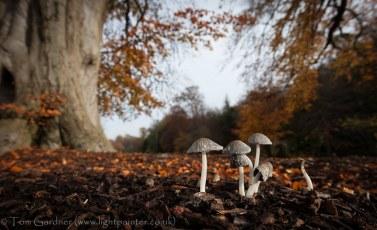 Autumn Fungi, Newbattle Abbey, Dalkeith