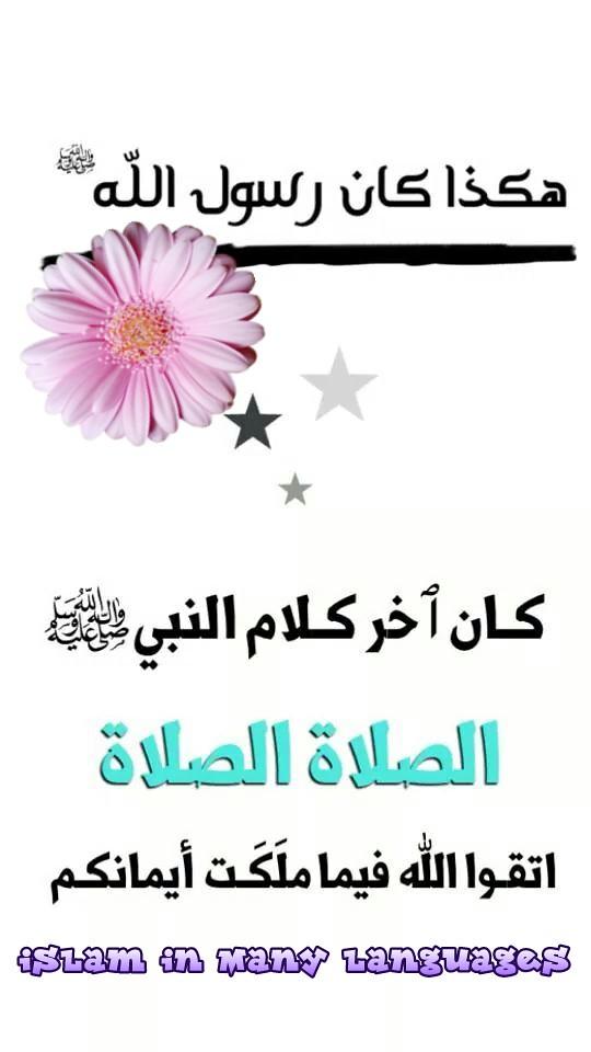 هكذا كان رسول الله صلى الله عليه وسلم Ibrahim Rashdan Flickr
