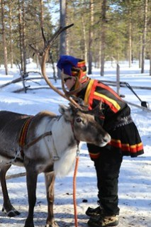 Sami and a reindeer