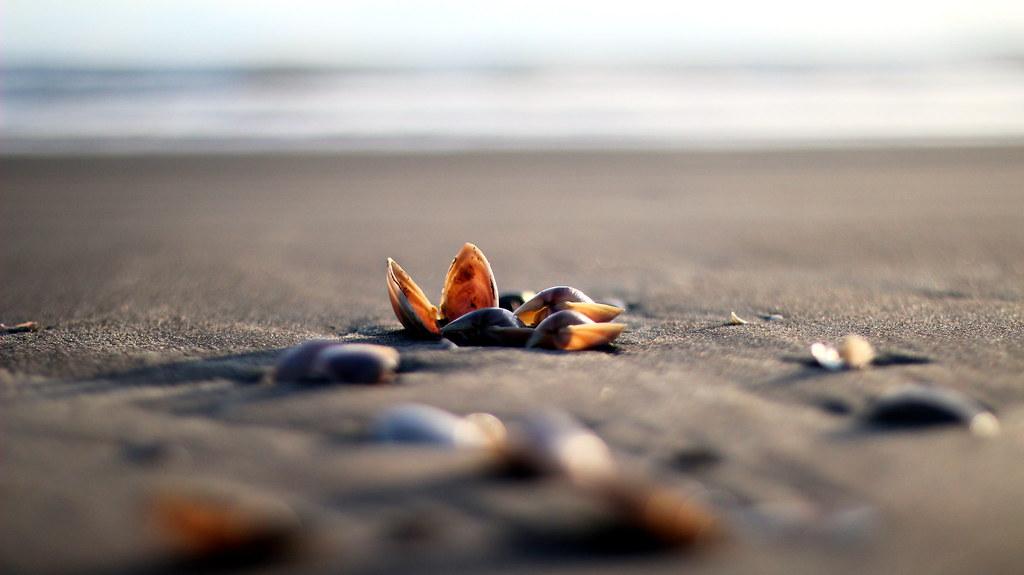 TA-DA ! [beach treasure 30]