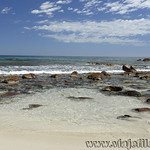 Viajefilos en Australia. Kangaroo 68