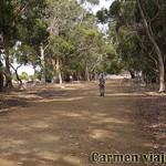Viajefilos en Australia. Kangaroo 15