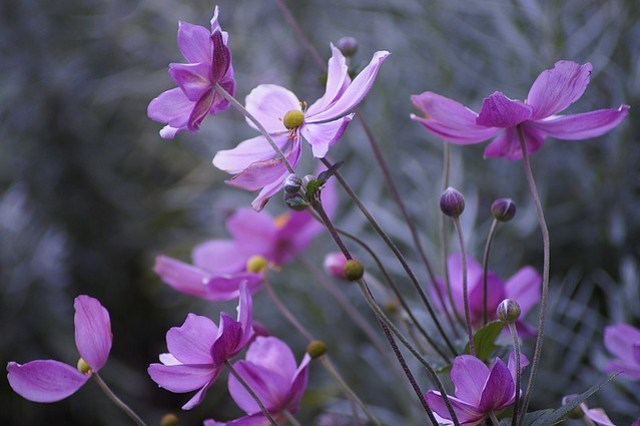 Bloemen in de tuin,september 029.JPG.ovf