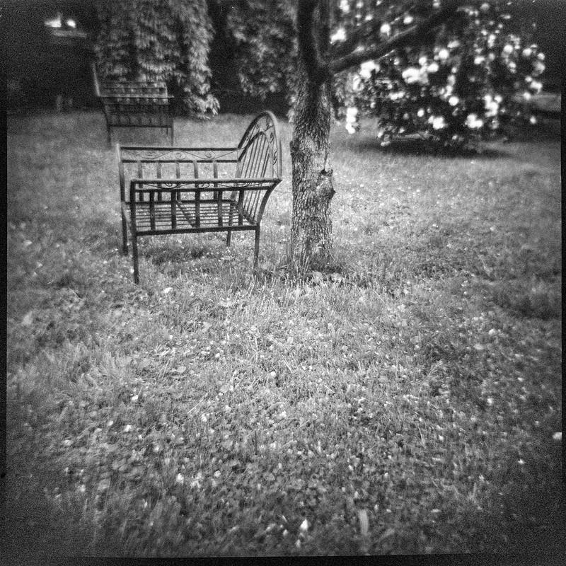 backyard benches, flowering shrub, lawn and tree, Asheville, North Carolina, Diana F+, Kodak TMAX 400, Ilford Ilfosol 3 developer, 5.7.18
