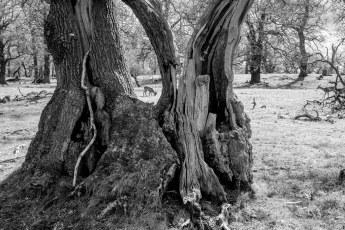 Trees180430-134e.jpg
