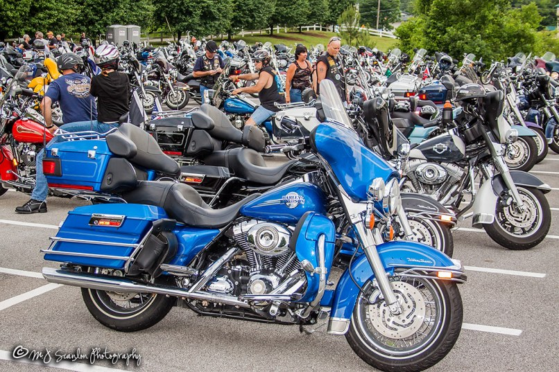 2010 Tennessee State Hog Rally