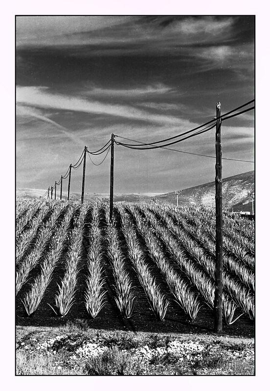 Leica M3 Landscape