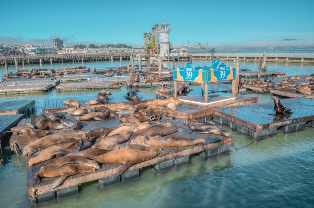 Sea lions at Pier 39, San Francisco, USA