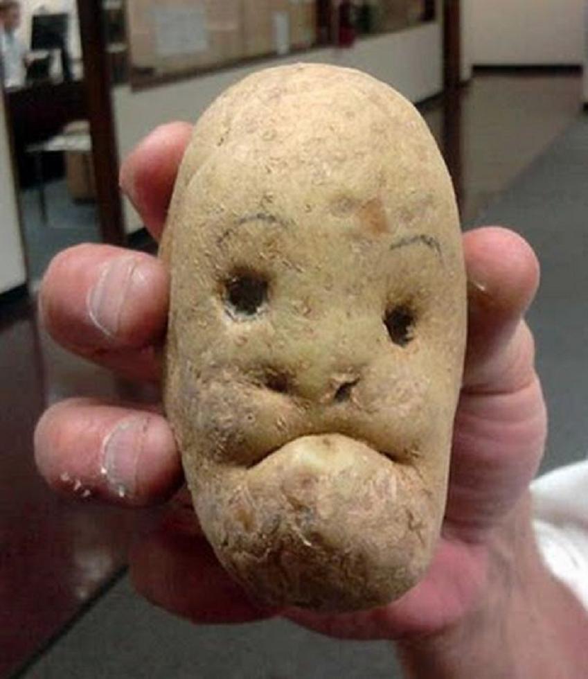 Potato Fat 114