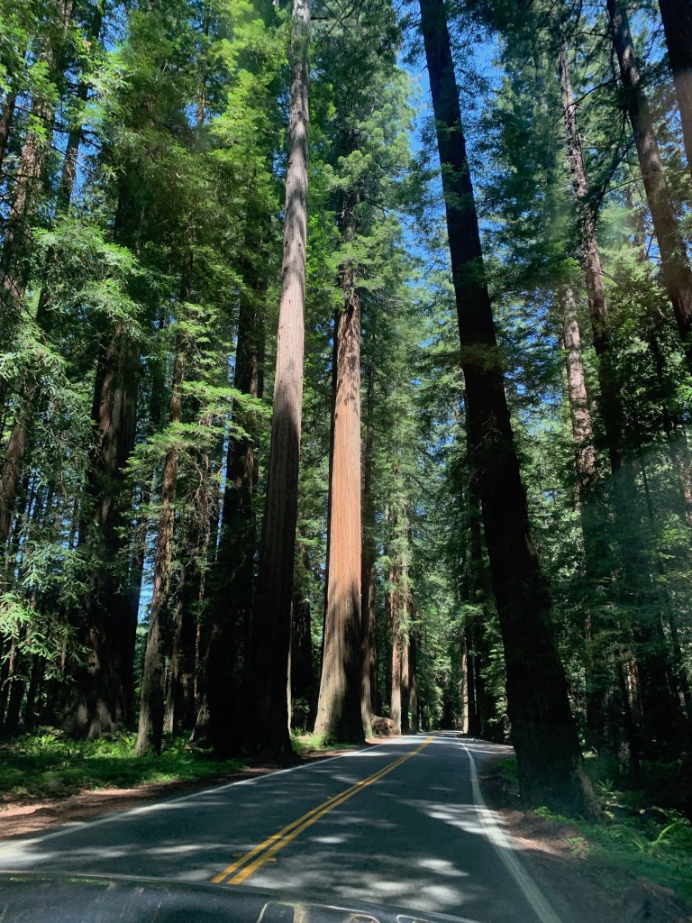 Redwoods Camping- Avenue of the Giants