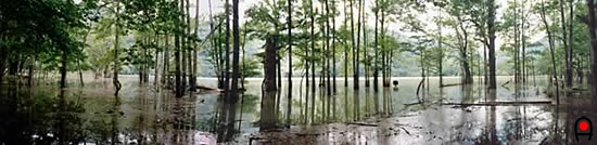 奥日光 西ノ湖(増水状態)の写真