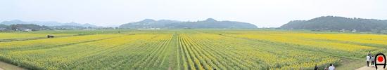 2013益子ひまわり祭り展望台からの眺めの写真