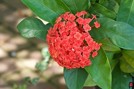 トロピカルな花?の写真