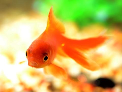fish-881161_640