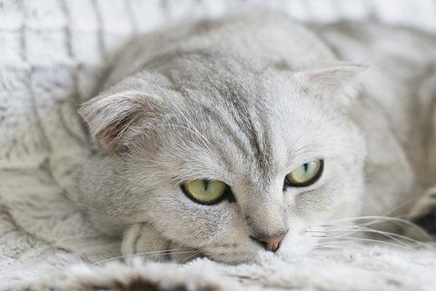 cat-2310384_640