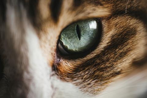 tomcat1581_TP_V