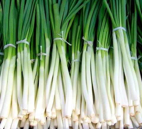 green-onion-699943_640