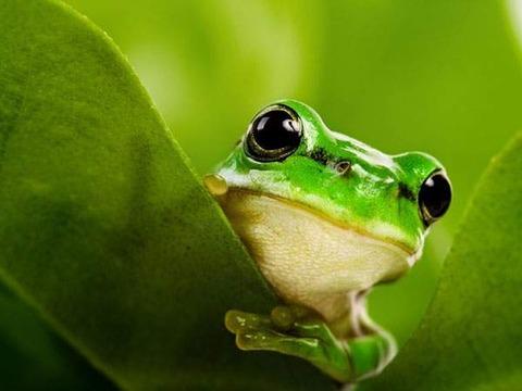 wallpaper-frog-photo-12