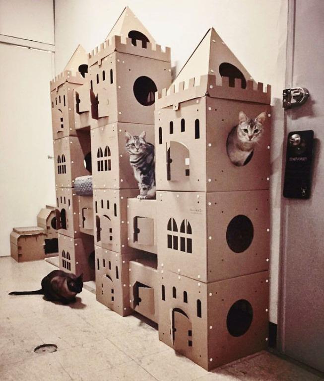 cats-cardboard-forts-4-5f2cf2d0d27e5__700