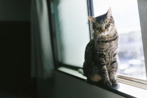 cat125IMGL5551_TP_V