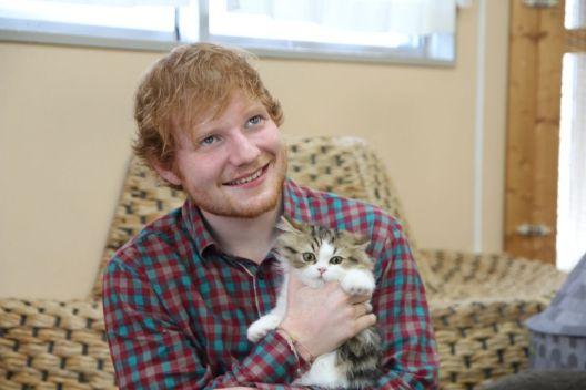 「エド・シーラン 猫」の画像検索結果