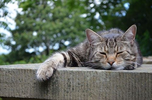 cats-168144_640_R