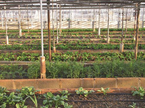 greenhouse-3247181_1280_R