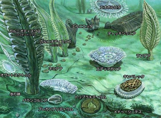生物の変遷まとめ-多細胞生物~...