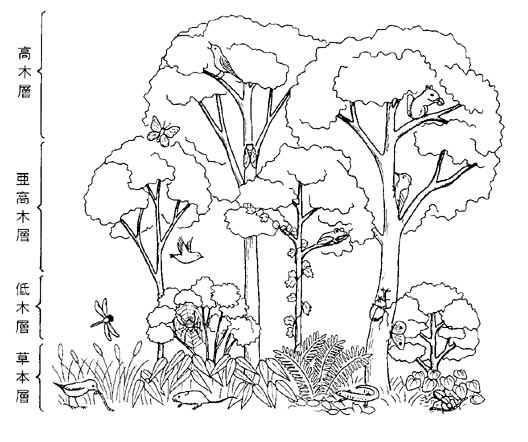 森林 | 自宅で学ぶ高校生物-生物...