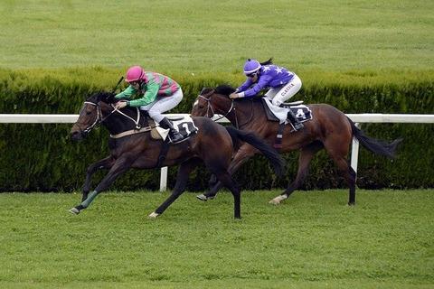 horse-racing-1577292_640