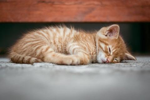 cat-1941089_640