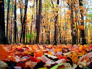 「秋分の日 画像」の画像検索結果