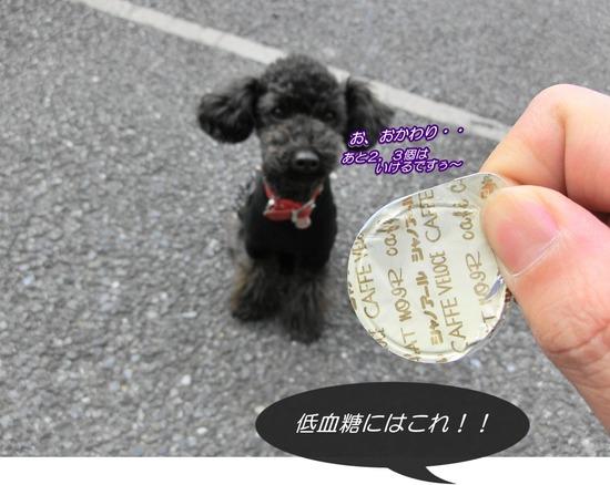 as know as de wan トイプードル 銀座リリー11