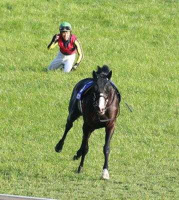 【天皇賞・秋】G1で放馬…大歓声が一転、悲鳴へダンビュライトは無念の競走除外