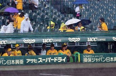 甲子園に大雨阪神-広島戦 開始見合わせ