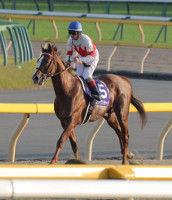 【天皇賞・秋】1番人気スワーヴリチャードは10着…Mデムーロ「スタートでぶつけられて、それで終わり」