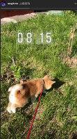 ザギトワ、愛犬マサルの散歩動画をインスタで公開