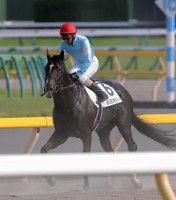 【日本ダービー】25度目ダービー挑戦・蛯名騎手ゴーフォザサミット7着「1コーナーで不利を受け…」