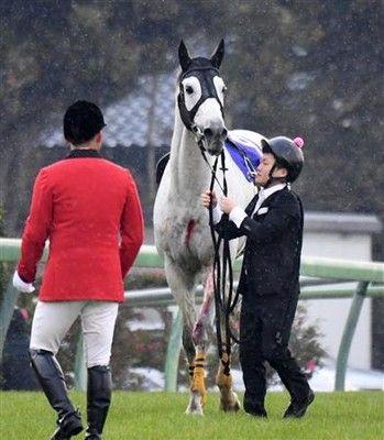 中山大障害で落馬のアップトゥデイトは長期療養へ「かなりひどい裂傷で入院加療が必要」