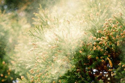 花粉 窓 花粉症に関連した画像-01