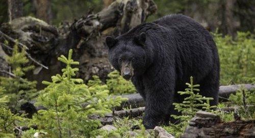 熊 射殺 批判 反論に関連した画像-01