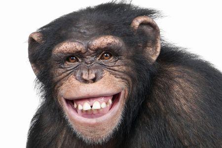 動物園 賢い チンパンジー 脱走に関連した画像-01