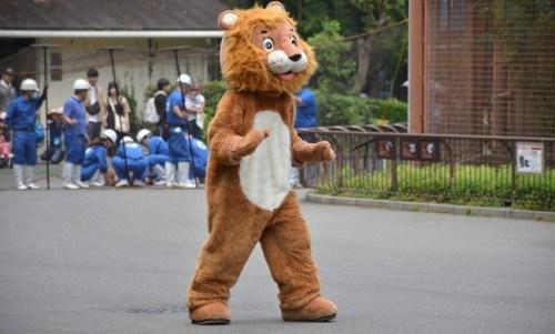 ライオン脱走 着ぐるみ訓練 愛媛県立とべ動物園に関連した画像-01