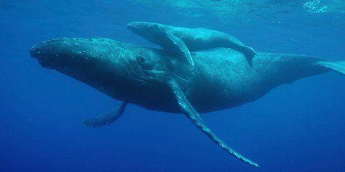 捕鯨 IWC 脱退 クジラ 漁に関連した画像-01