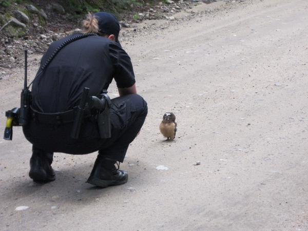 フクロウ 警察 事情聴取 保安官 梟に関連した画像-02
