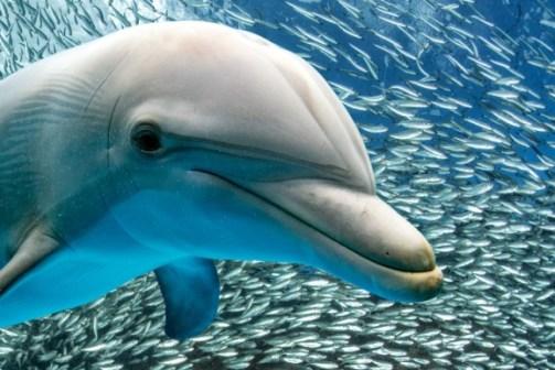 「イルカ」の画像検索結果