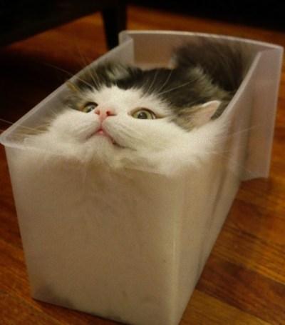 「猫は液体」の画像検索結果