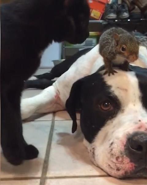 猫からリスを守る犬02
