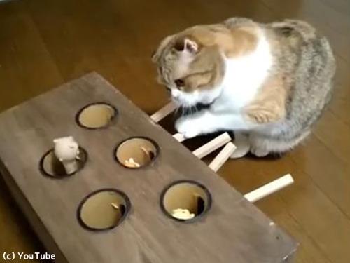 モグラたたきで遊ぶ猫00